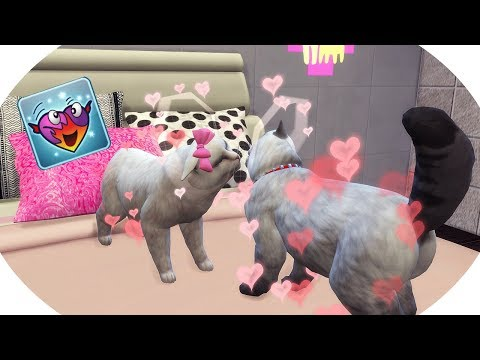 CAT WOOHOO! | 100 Kitten Challenge #3 | The Sims 4